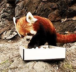 Smaczne sushi mały?