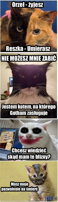 Koty z Batmana
