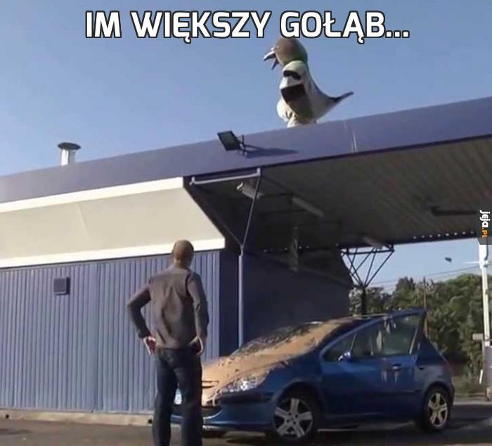 Im większy gołąb...