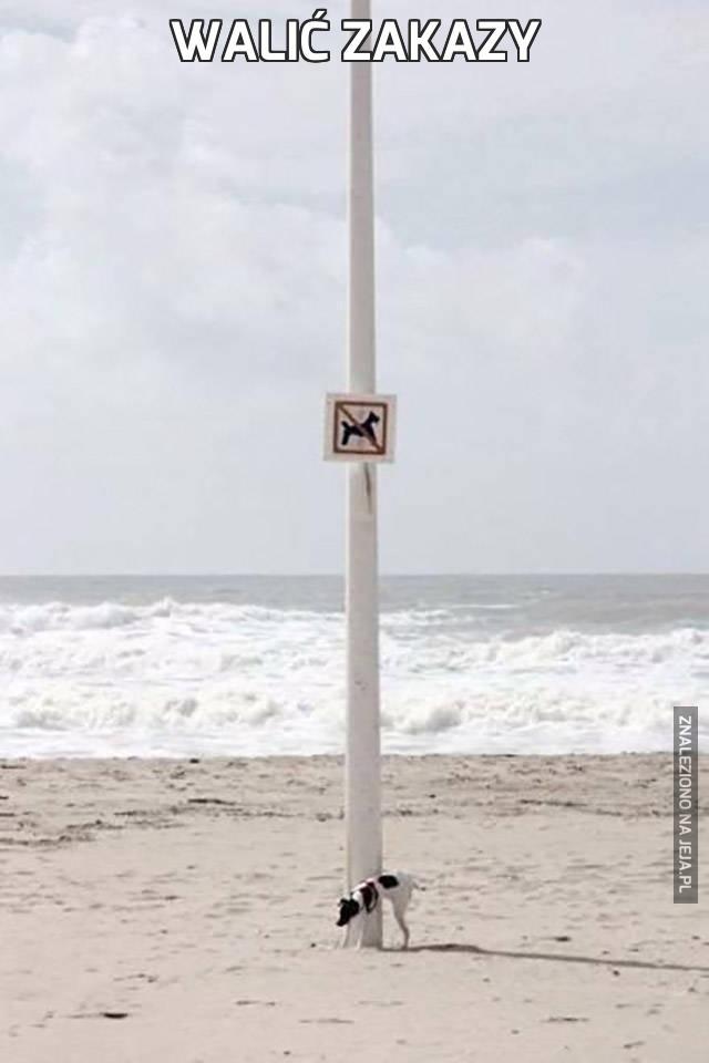 Walić zakazy