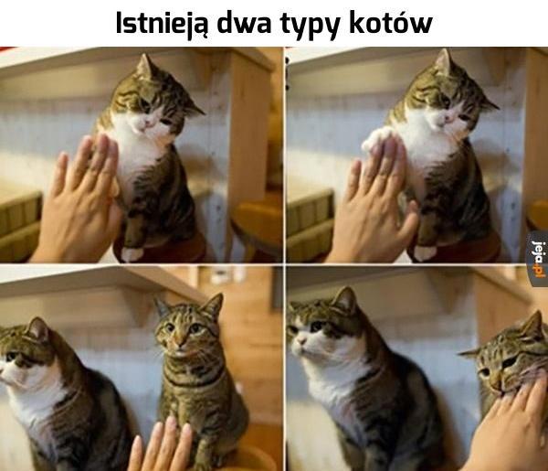 Dwa typy kotów