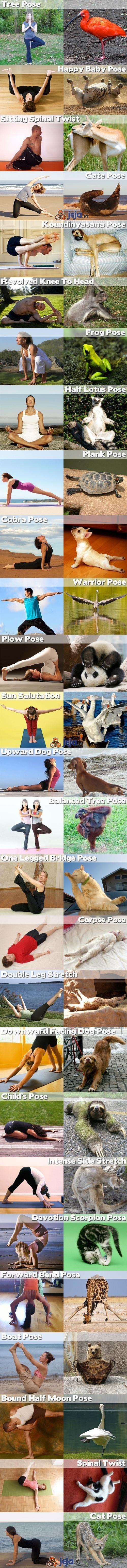 Nawet zwierzęta uprawiają jogę