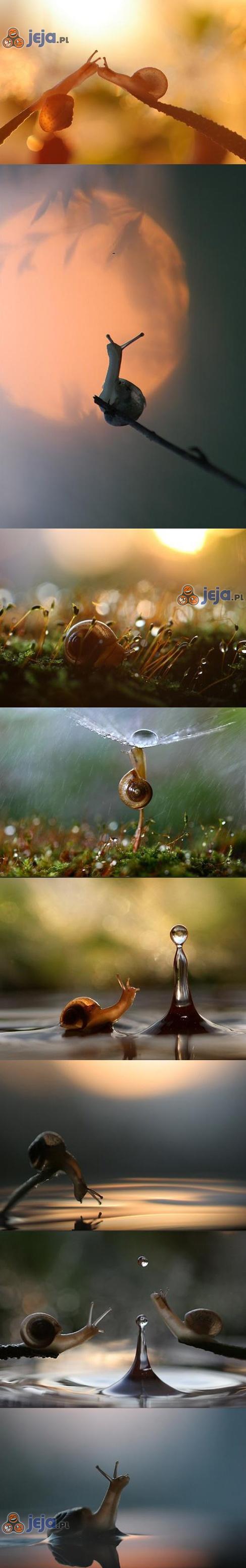 Romantyczna podróż po świecie ślimaków