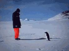 Pingwiny są potężniejsze, niż myślisz
