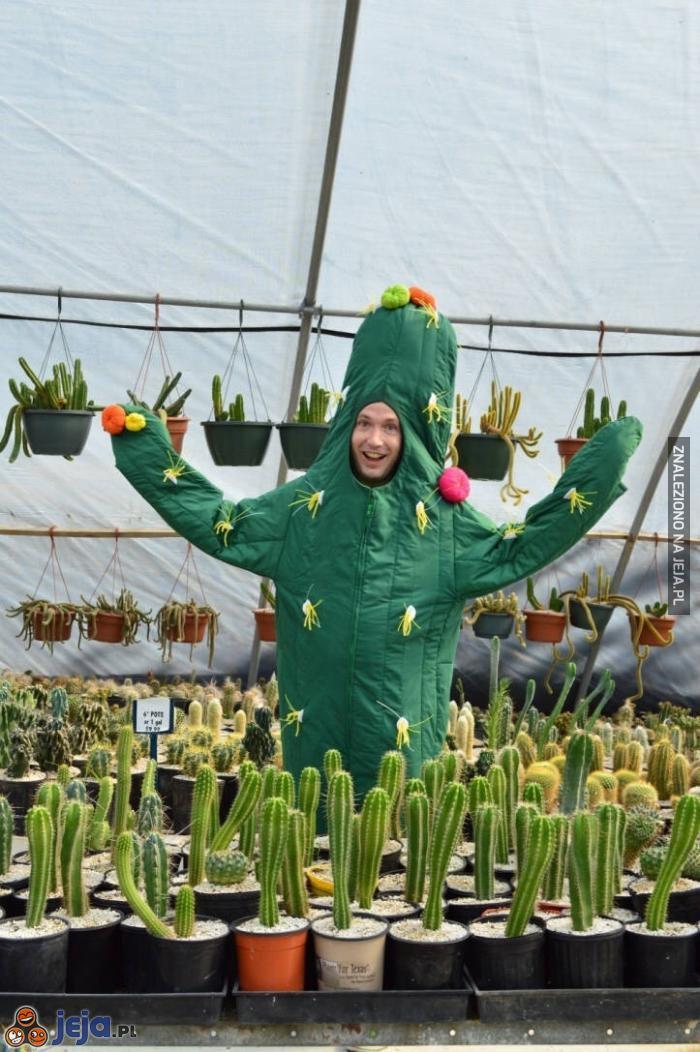 Może kaktusa?