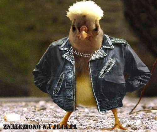 Bojowy kurczak