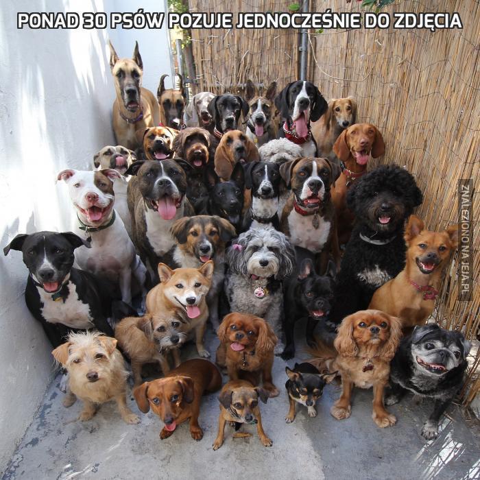 Ponad 30 psów pozuje jednocześnie do zdjęcia
