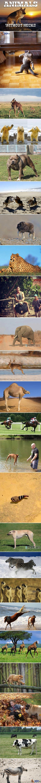 Zwierzęta bez szyi