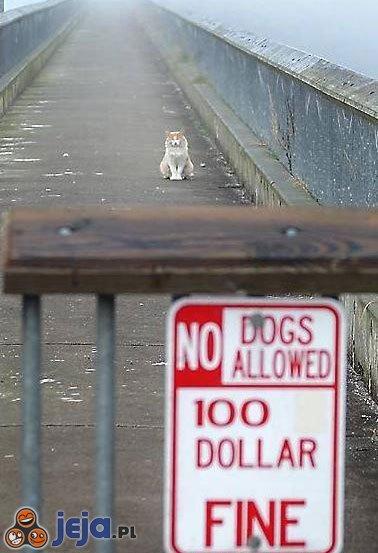 Zakaz wstępu dla psów