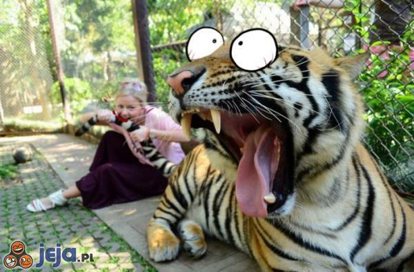 Ukąszony tygrys