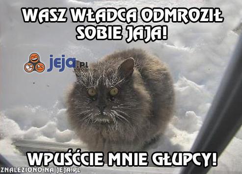 Mrożony kot, raz!
