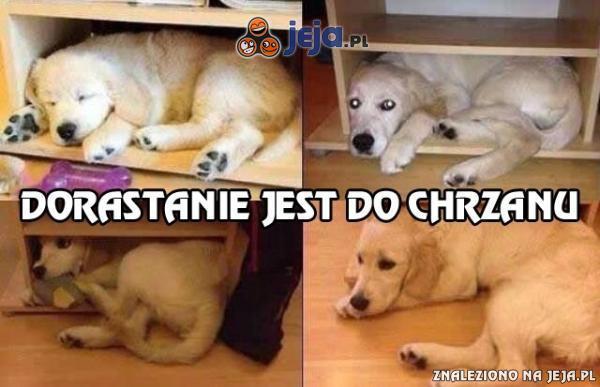 Pies i jego ulubione miejsce