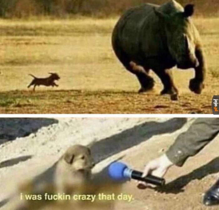 Zwariowany dzień szczeniaczka