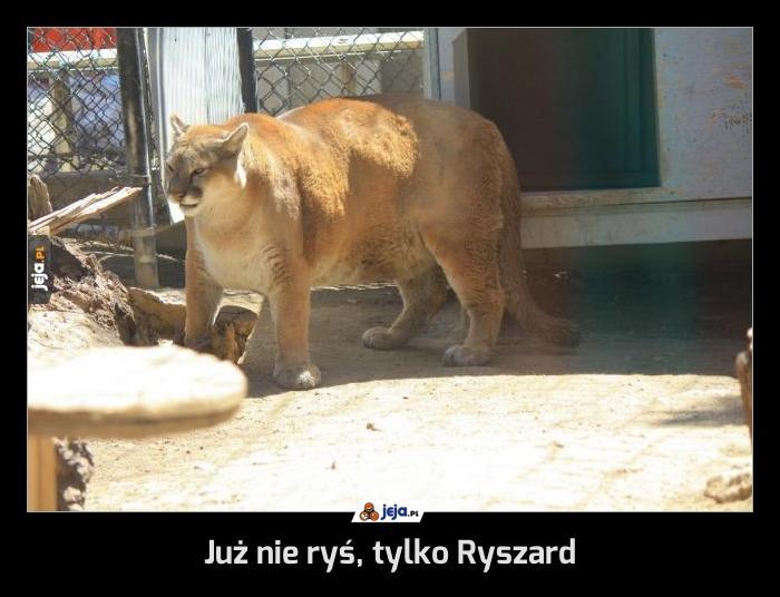 Już nie ryś, tylko Ryszard