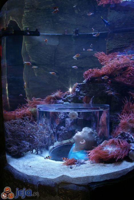 Pomysłowe akwarium