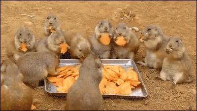 Chipsy na obiad, mmmm...