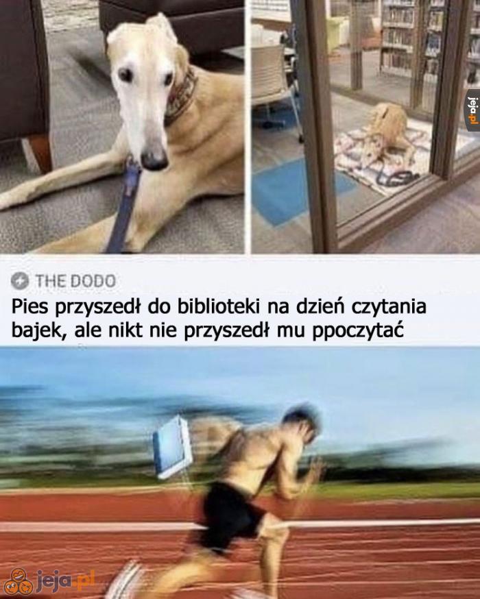 Kocham psy, wszyscy kochajmy psy
