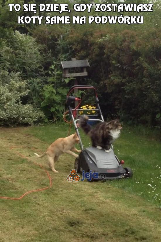To się dzieje, gdy zostawiasz koty same na podwórku
