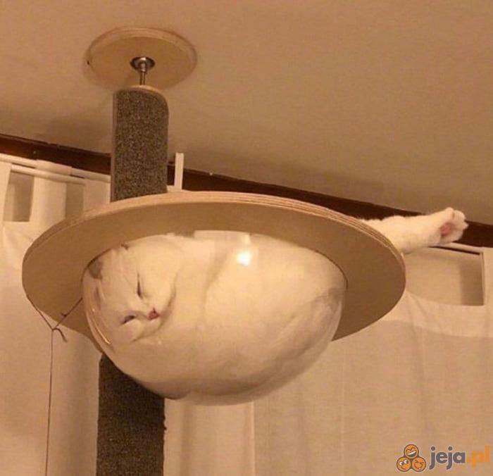 Koty to ciecze