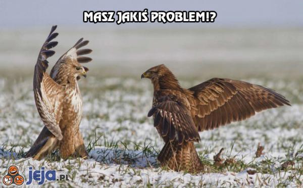 Masz jakiś problem!?