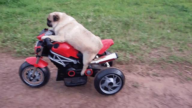 Nie będziesz jeździć po moim trawniku!