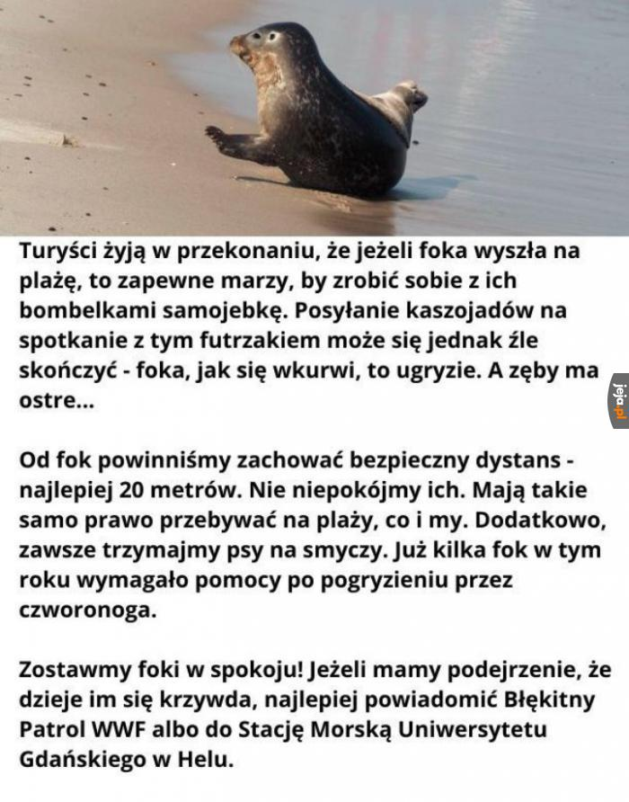 Zostawmy foki w spokoju