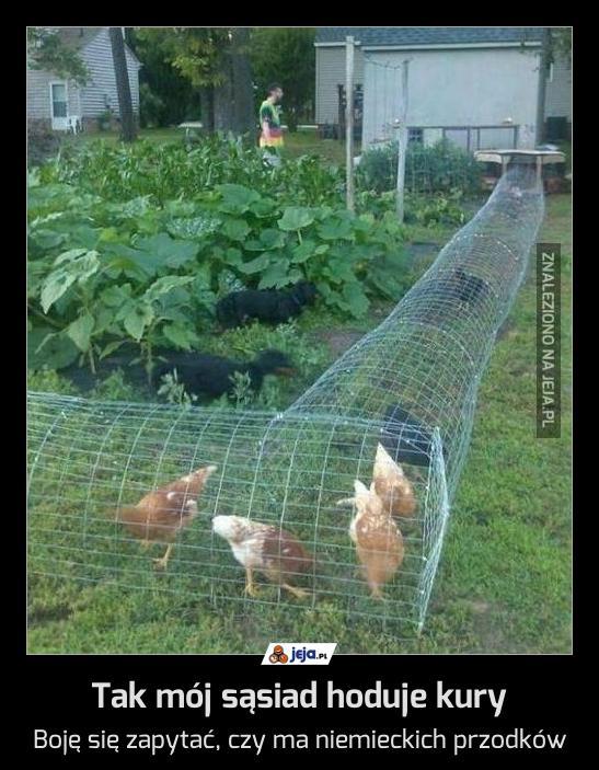 Tak mój sąsiad hoduje kury