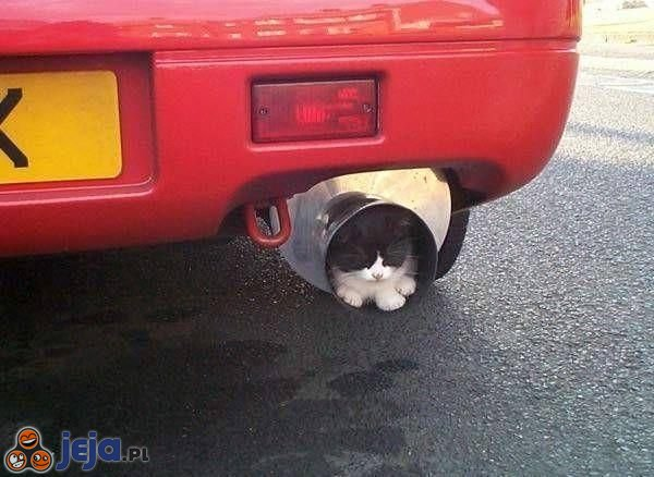 Kot w wydechu