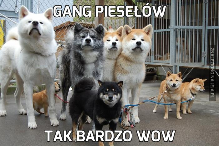 Gang piesełów