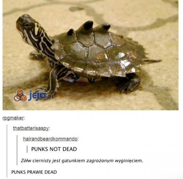 Punk's not dead!