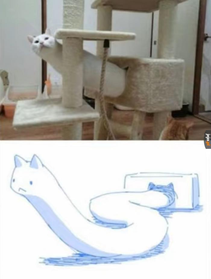 Wąż kotkowy jest futerkowy