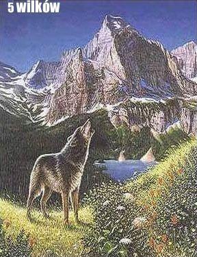 Znajdź 5 wilków