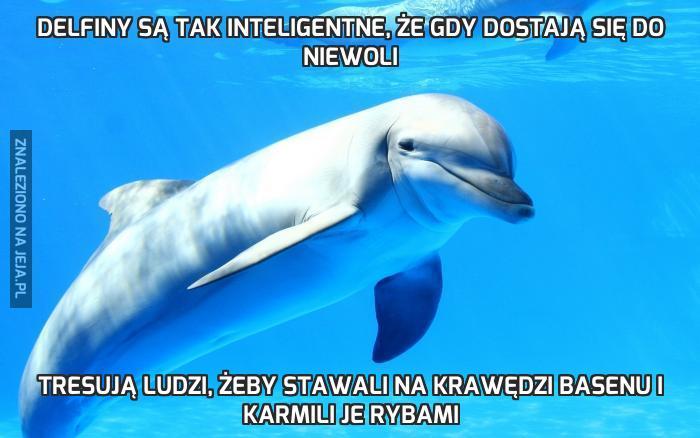 Delfiny są tak inteligentne, że gdy dostają się do niewoli