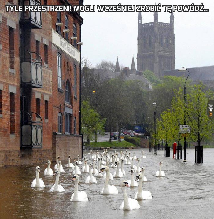 Tyle przestrzeni! Mogli wcześniej zrobić tę powódź...