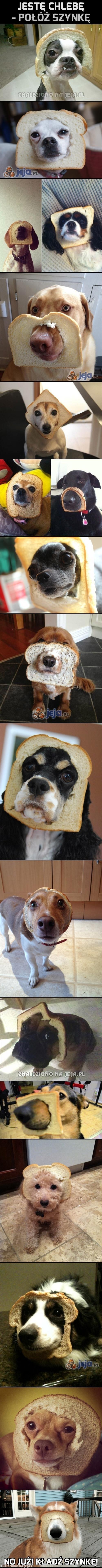 Jestę chlebę