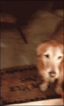 Gdy nawet Twój pies nie jest w stanie Ci zaufać...