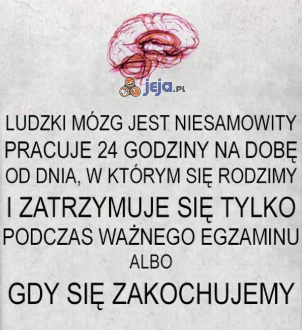 Ludzki mózg jest niesamowity