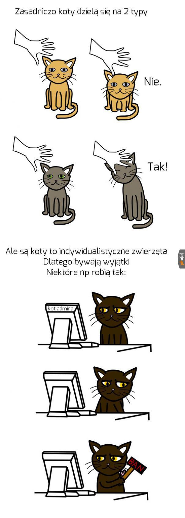 Różne bywają koty