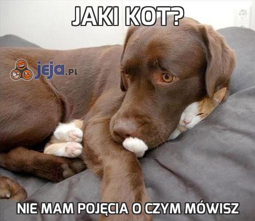 Jaki kot?
