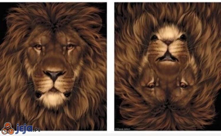 Groźny jak lew