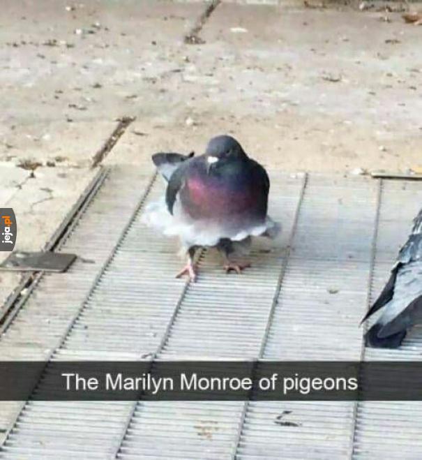 Marilyn Monroe wśród gołębi