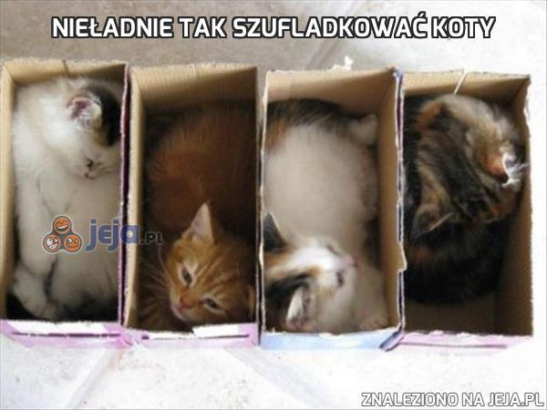 Nieładnie tak szufladkować koty