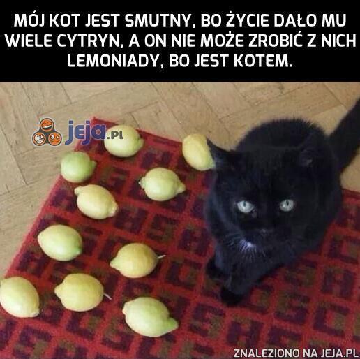 Życie! Po co dałeś mojemu kotu cytryny?