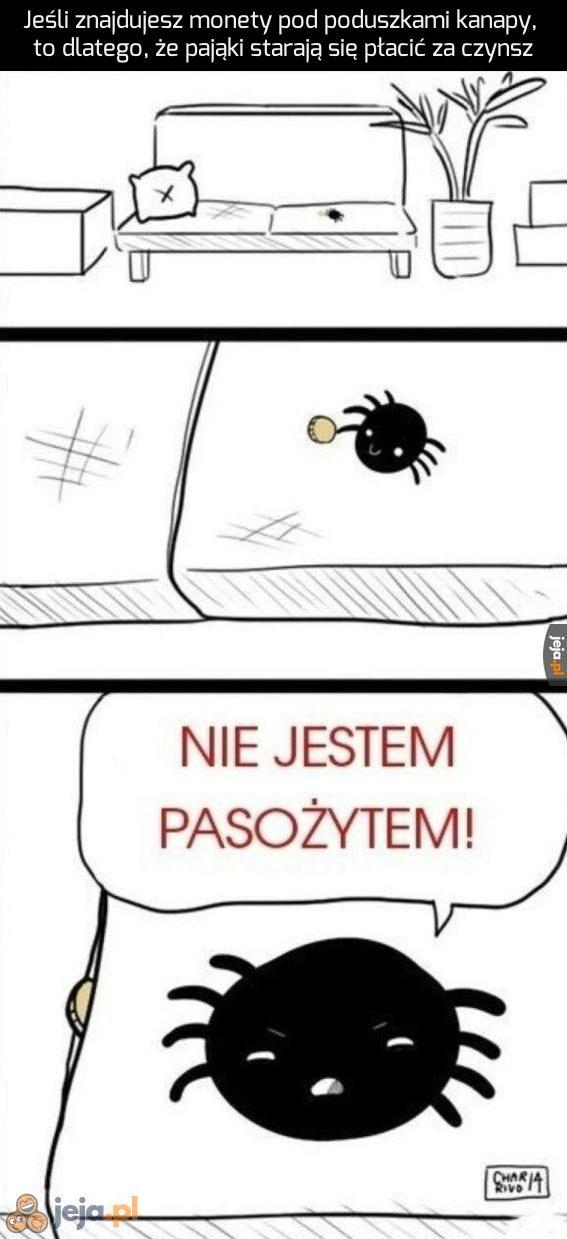 Nie zabijaj pająków