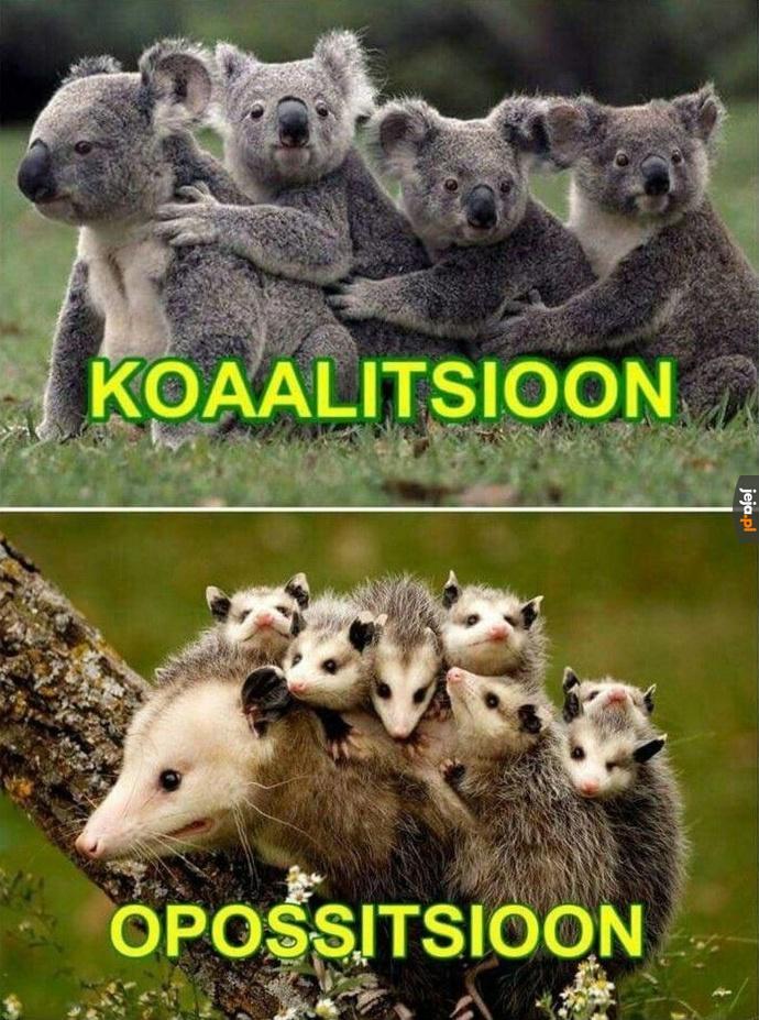 Koalicja vs opozycja
