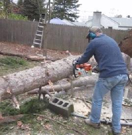 Zmartwychwstanie drzewa