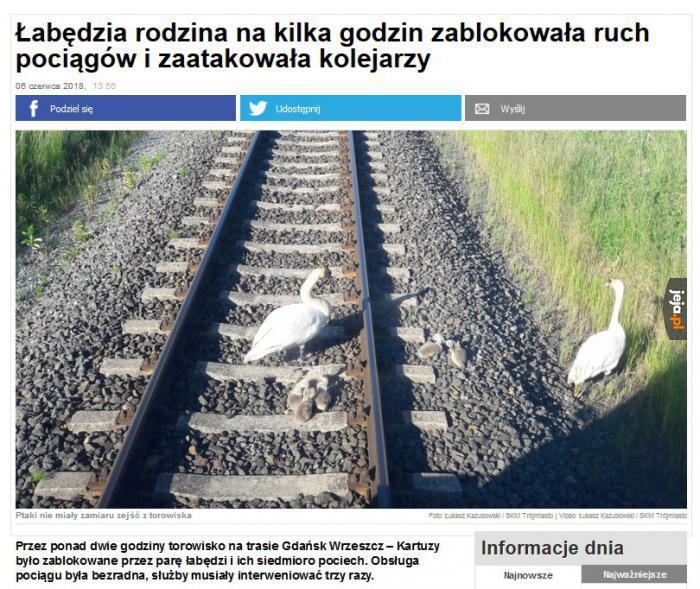 Terror w Gdańsku