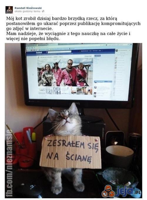 Jak skompromitować kota
