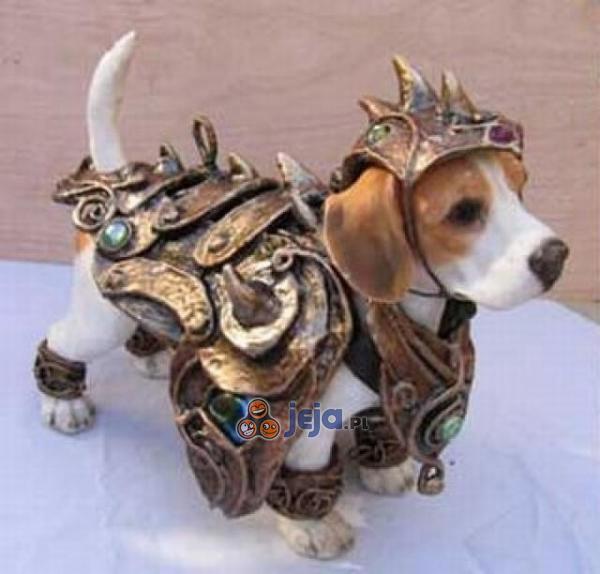 Zbroja dla psiaka
