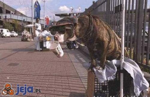 Pies żebrak